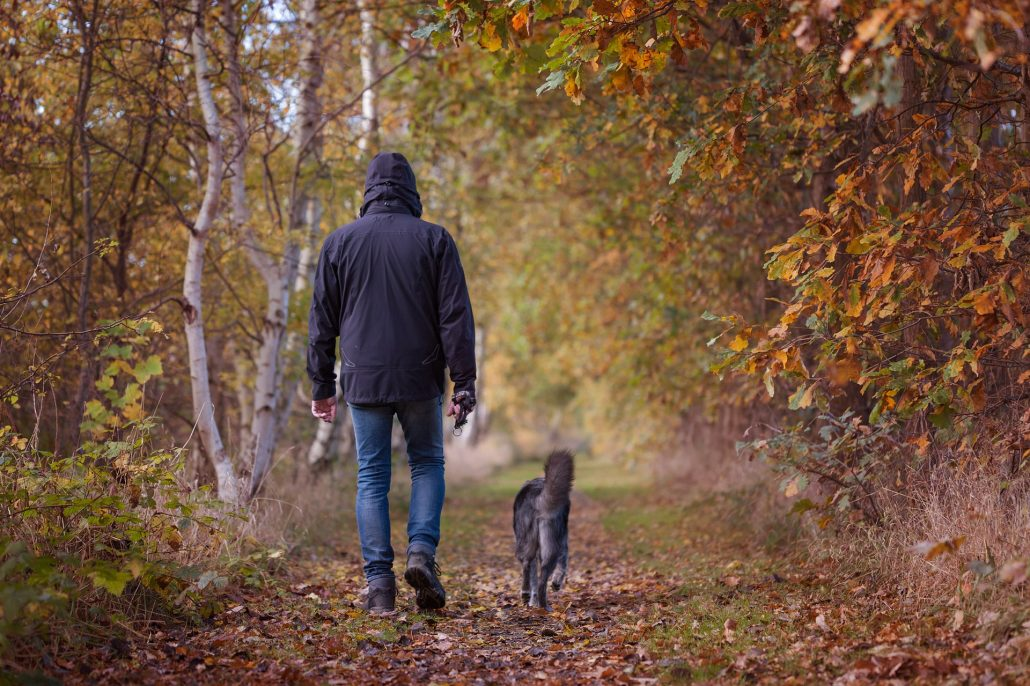 autumn walk man with his dog